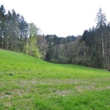 Wiesengrundstück, südlicher abseits gelegen
